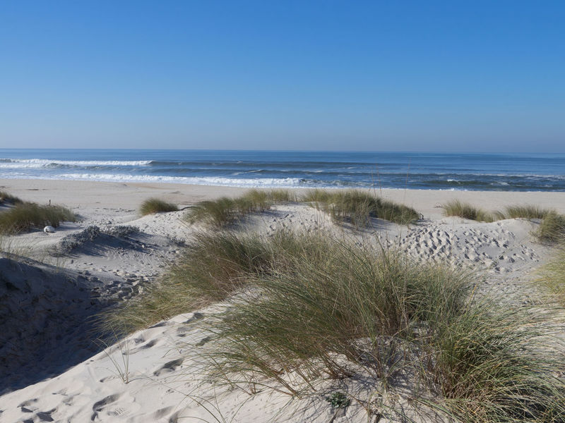 Atlantic Ocean Beach Beach Day Beachphotography Blue Clear Sky Day Dunas Free Freedom Horizon Over Water Marram Grass Nature Nature Nature Reserve No People Outdoors Portugal Sand Scenics Sea Sky Summer Waves