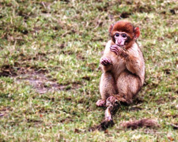 Sweet baby monkey Monkey Young Animal Mammal Animal Themes Outdoors Animal Wildlife
