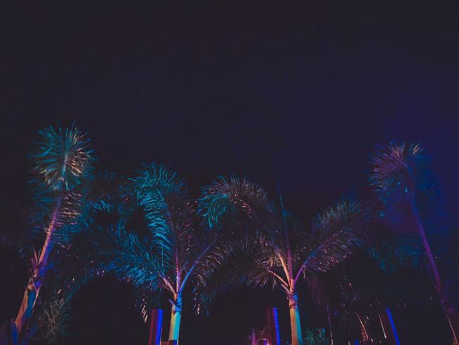Neon Palms Zamboanga Philippines Street Streetlights Nightphotography Night Nightscape Citylife Urbanjungle Huaweimobileph Huaweip20pro Phoneproducedcontent PhonePhotography City Illuminated Multi Colored Excitement Arts Culture And Entertainment Firework Display Celebration Nightlife Event Celebration Event Glowing