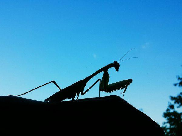 Praying Mantis Eyem Nature Lovers  Eyem Best Shots Nature