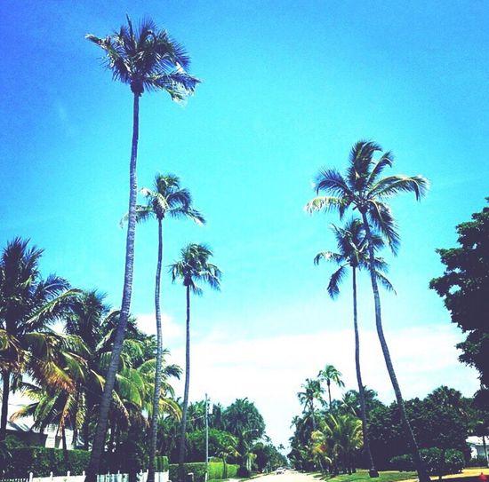 Naplesflorida 5thavenue Naplespier Palm Trees #serenity  Peacefuldrives