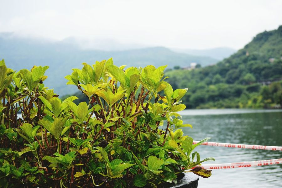 Mountain Mountain Range Growth Close-up Focus On Foreground Green Color Lake Beauty In Nature Water Non-urban Scene Tranquility Plant Tranquil Scene In Front Of Freshness Nature Scenics Green Sky Sea Lavasa Hill City Lavasacity Lavasacitypune Lavasa📷 Lavasa City Pune