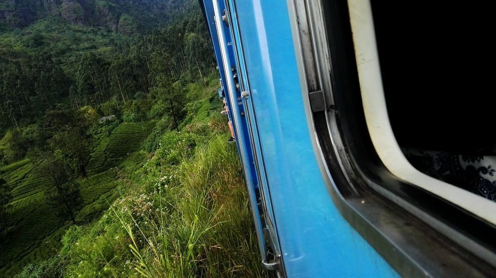 Ceylon Ceylon Tea Sri Lanka Sri Lanka Travel Tea Plantation  Train Sri Lanka Train EyeEm Selects Day Outdoors Nature Tree