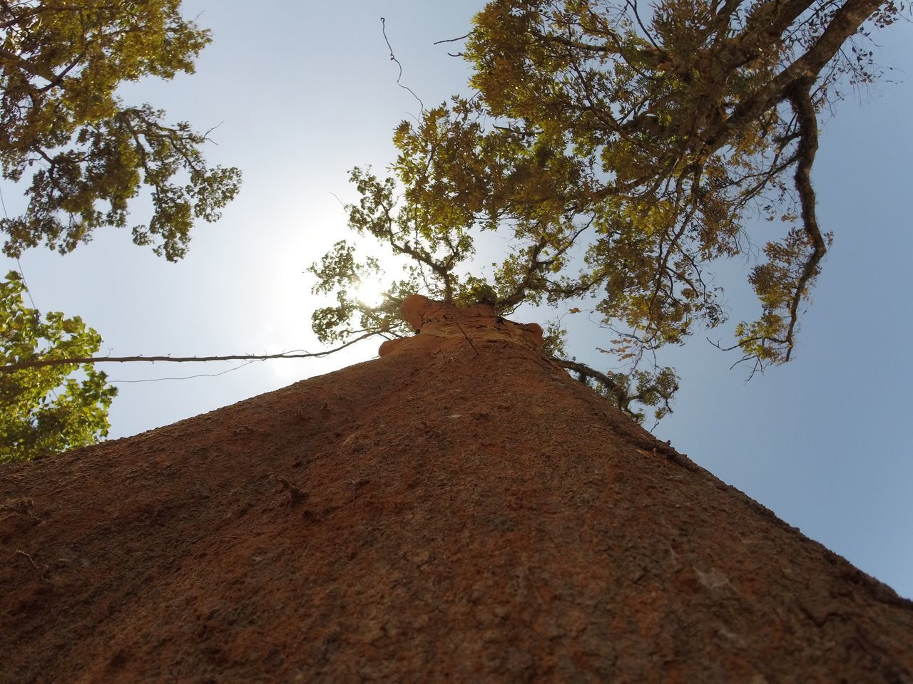 tree, low angle view, architecture, no people, day, built structure, outdoors, sky, growth, branch, clear sky, nature