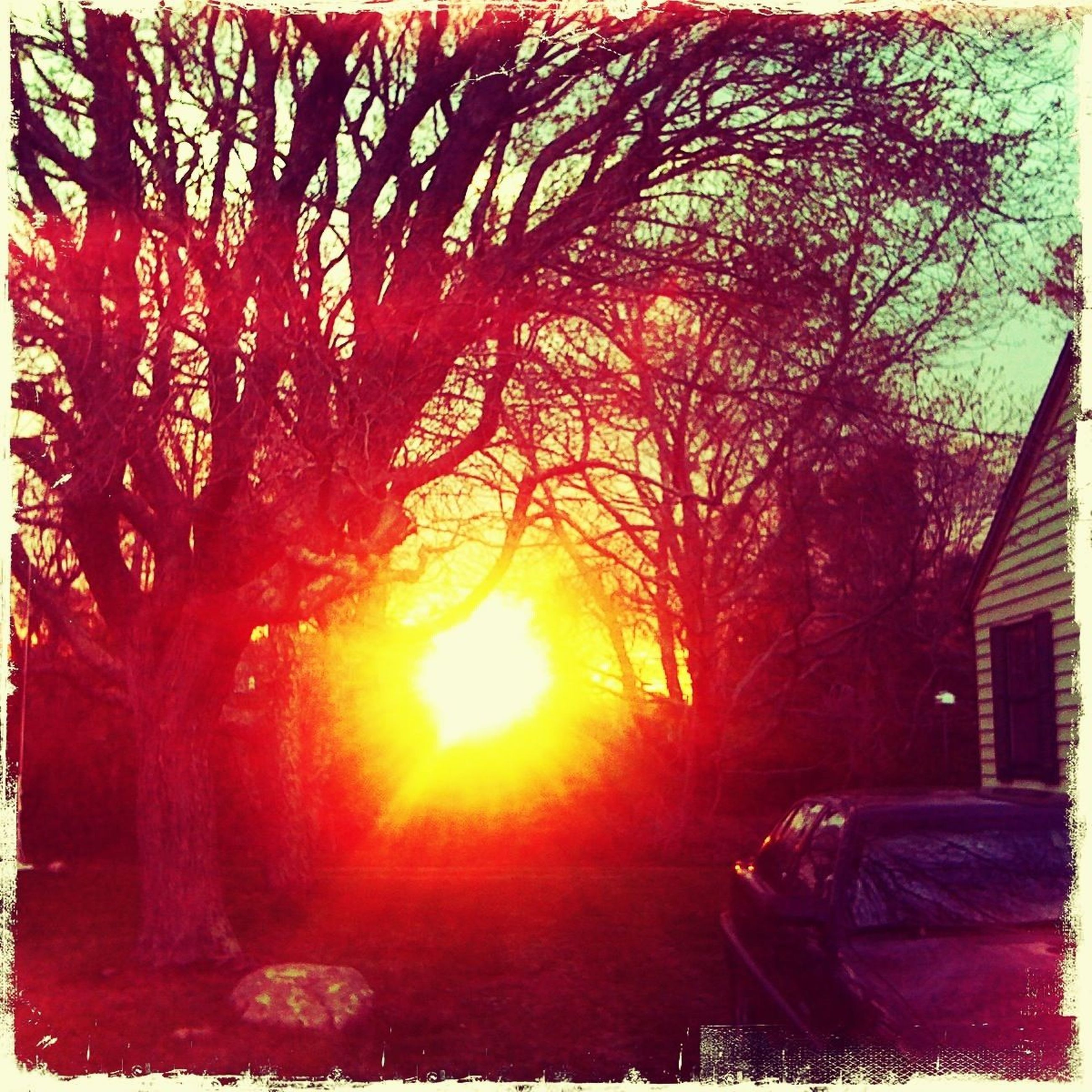 tree, sun, transfer print, sunset, bare tree, branch, auto post production filter, sunlight, building exterior, built structure, sunbeam, nature, architecture, orange color, lens flare, sky, tranquility, house, no people, growth