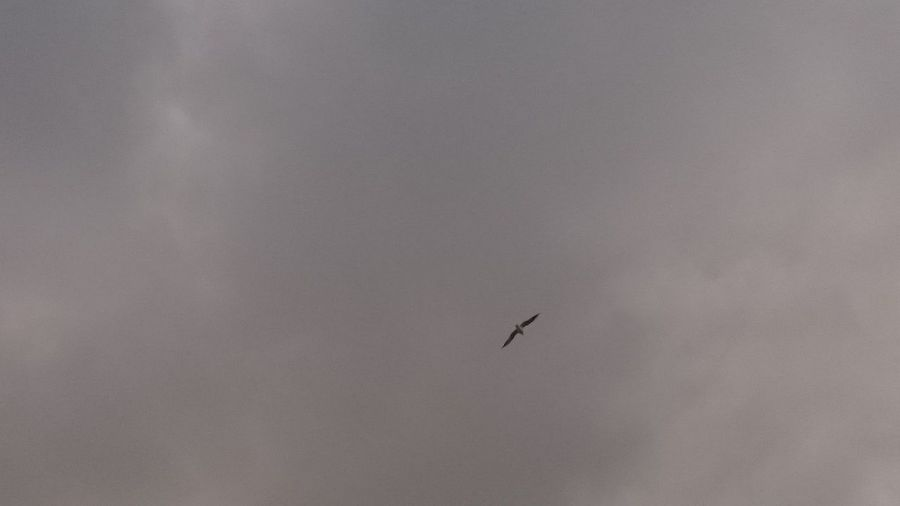 Bird Photography Seagull Seagull ın Flıght Seagulls Flying Over Me Clouds And Sky Lonely Bird