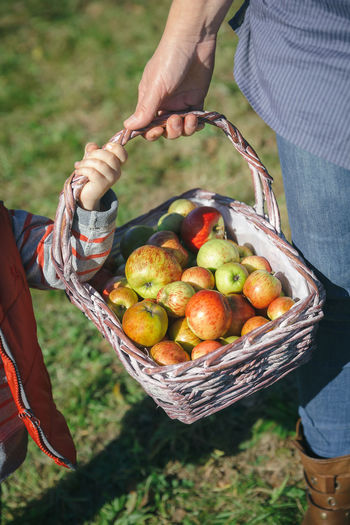 Closeup of woman and little girl holding a wicker basket with fresh organic apples. Healthy food and harvest time concept. Agriculture Apple Autumn Family Farm Farmer Mother Tree Wicker Basket Fall Food Fruit Girl Harvest Harvesting Holding Leisure Activity Orchard Organic Outdoors Picking Real People Togheter Vertical