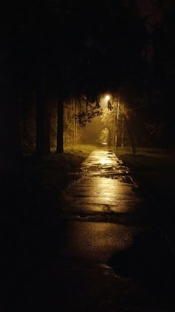 Парк Кирова парк кирова Ночь Лес фонари огни лужи Дорога асфальт