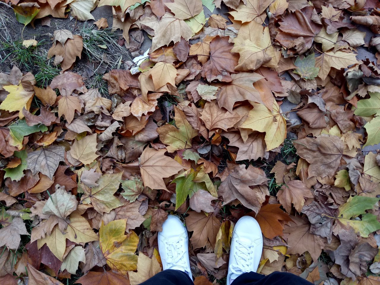 leaf, autumn, change, dry, low section, human leg, leaves, shoe, real people, fallen, standing, outdoors, day, nature, high angle view, one person, men, human body part, maple leaf, beauty in nature, close-up, maple, people