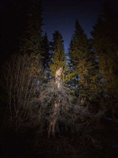 Person standing on field against trees at night
