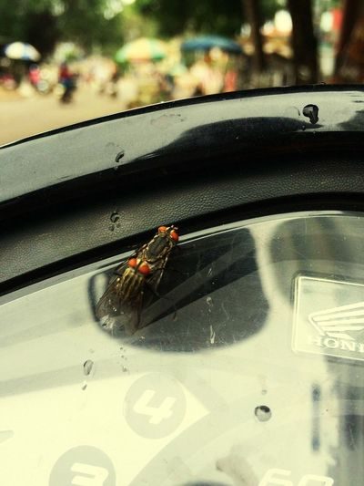 Close-up of insect on car