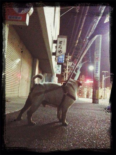 夜の街がSilent〜? Pug Love Pug Time Pug Sitter Pug Life  メス求む☆彡