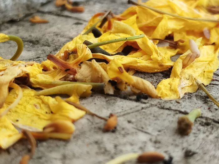 multiply petals falled on the ground Multiply Petals Ground Rain Yellow Close-up