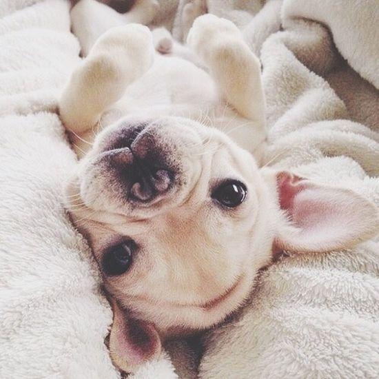 ??? Puppy Baby Photography We Heart It Likeforlike Followme Dog Pretty Beautiful 20likes