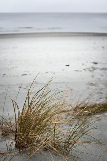 Nature Water Sea Beach Tranquil Scene Tranquility Outdoors Horizon Over Water Beauty In Nature Scenics Day No People Sand Marram Grass Grass Sky Close-up Sand Dune The Week On EyeEm EyeEm Gallery EyeEm Best Shots EyeEm Best Edits The Week On Eyem Foggy Autumn