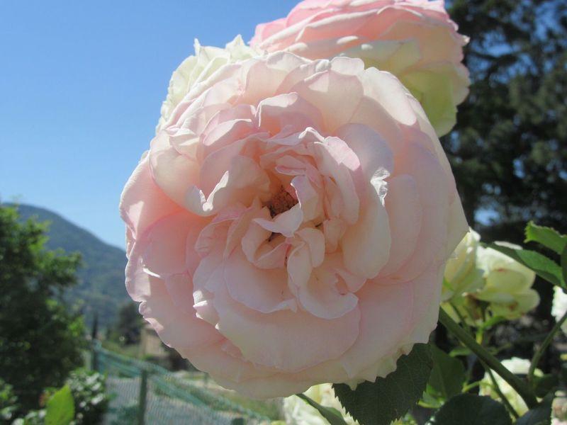 Flowers Roses Rose🌹 The Week Of Eyeem The Week On EyeEem The Week On Eye Em The Week