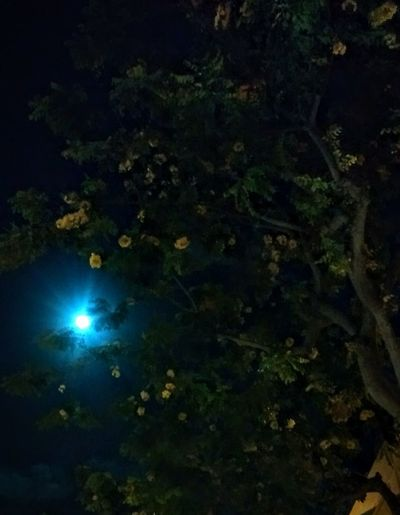 Bright Moon No People EyeEm Nature Lover Tree Leaves And Flowers Night Sky EyeEm Market © Lost In The Landscape