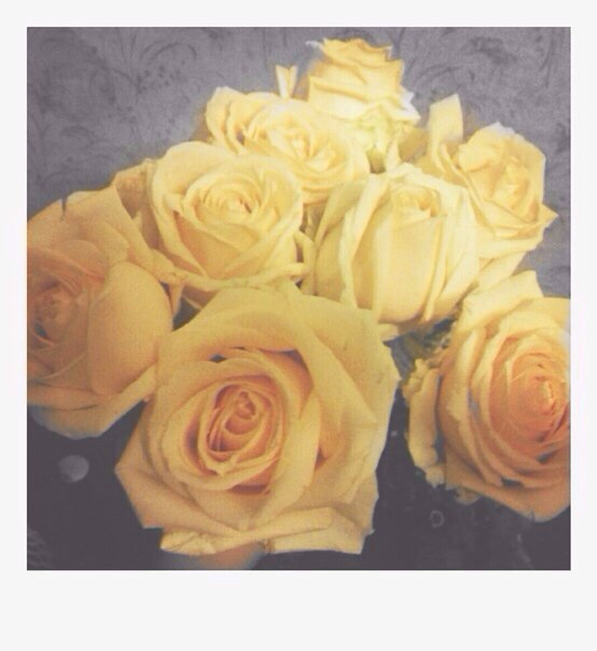 transfer print, flower, freshness, petal, rose - flower, auto post production filter, indoors, flower head, close-up, fragility, high angle view, rose, studio shot, still life, beauty in nature, yellow, no people, nature, food and drink, table