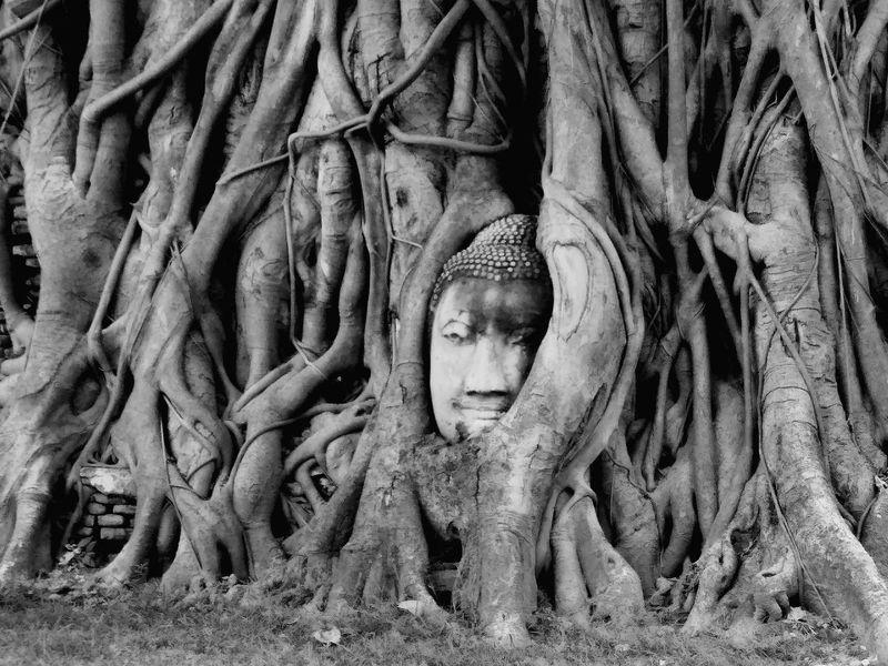 """""""ธรรม(ะ)ชาติ"""" Ancient Ancient Civilization Tree Antiquities In Thailand Historic"""