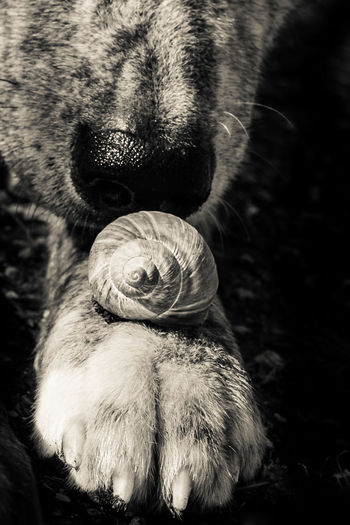 Dogs Fun Funny Individuality Snail Animal Themes Animals In The Wild Blackandwhite Close-up Day Dog Love Dognose Dogpaw Dogportrait Dogsniffel Domestic Animals Magazine Mammal Monochrome Nature No People Nose One Animal Outdoors Paw Pets Portrait Sniffel Sniffle