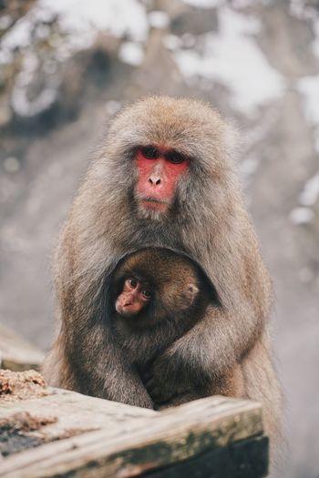Monkey looking away