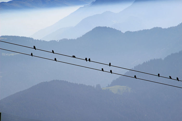 Alps Animal Themes Bird Dolomites Gadertal Mountain Mountains Plan De Corones