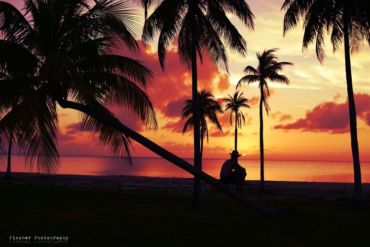 Sunset Silhouette Vacations Outdoors Sea Water Tree Scenics People One Person Nature Sky Adults Only Adult Day Isla De Juventud Chance Encounters