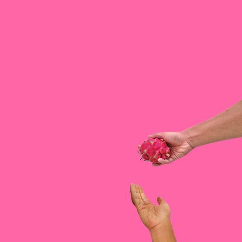Dragon fruit. Dragon Fruit Fruit Minimalism EyeEm Best Shots EyeEmNewHere EyeEm Gallery EyeEm Selects EyeEmBestPics Minimal Calm Holding Visual Creativity Human Hand Studio Shot Pink Background Pink Color Colored Background Impact Copy Space Breaking Close-up Magenta Dahlia Purple Background Bougainvillea Body Part Colorful Blooming