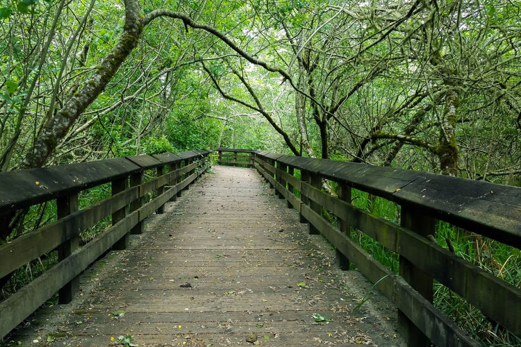 Sandpiper Trail