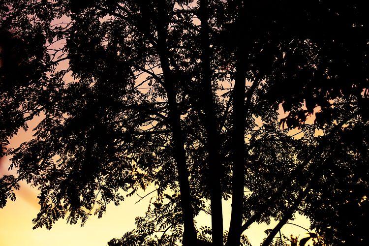 Sunset Tree Silhouette Sky