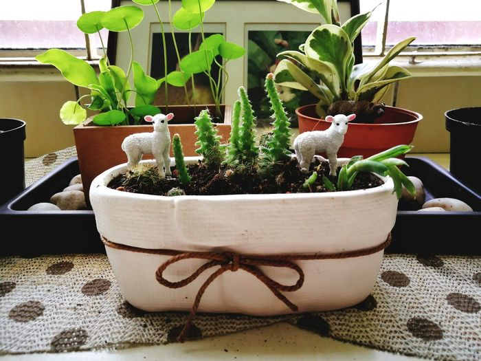Potted Plant Indoors  Table Plant Growth No People Nature Close-up Day Terrarium