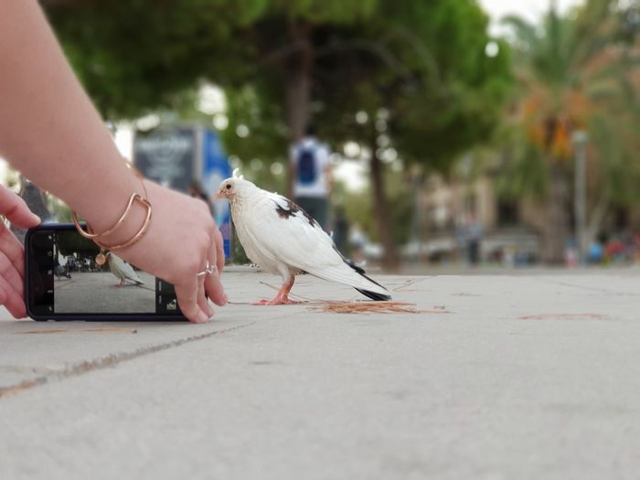 Seagull perching on hand by street in city