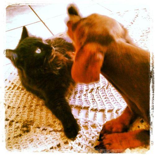 Meus amores...choquito e panine. Dog Cats Maroli Janetemaroli