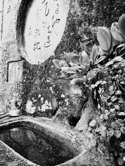 尾道、千光寺 にて Japanese  日本の風景 Black & White Bw_collection