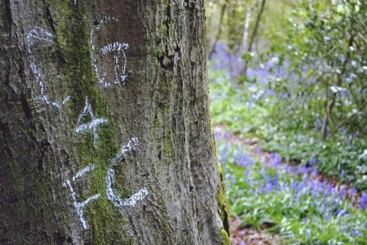 Love ? Tree Bluebells Love Photography