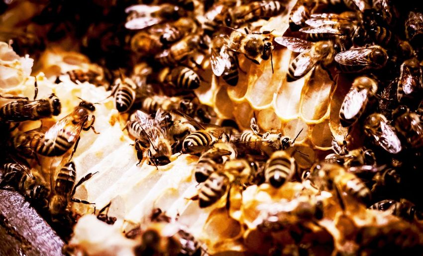 Neles Bienchen - Part 2 Bienenwabe Nature Antic Bienen  Biene Honig Honigbiene HoneyBee Honey Bee Honey Bees  Close-up Close Up Gelb Schwarz Gelbschwarz Schwarzgelb Schwarz Gelb Insects  Wabe Honigwaben Bees On Honeycomb Bees On Work Bee