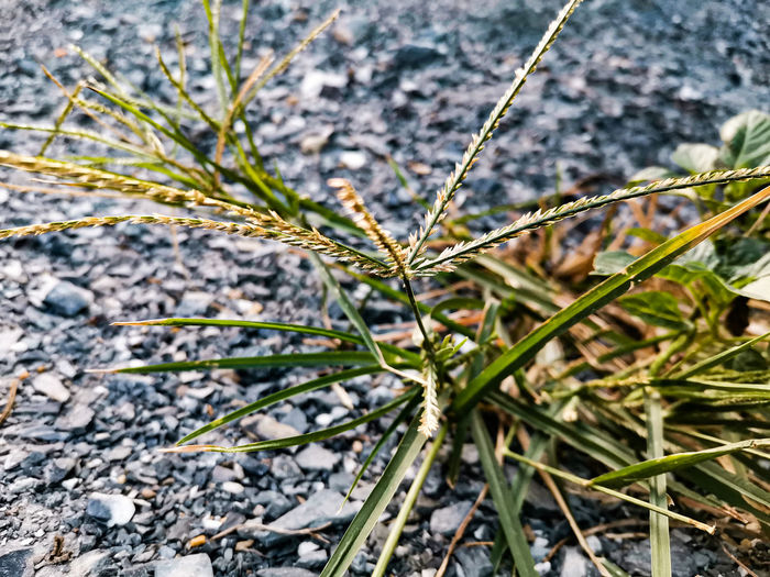 Close-up of plant growing on field
