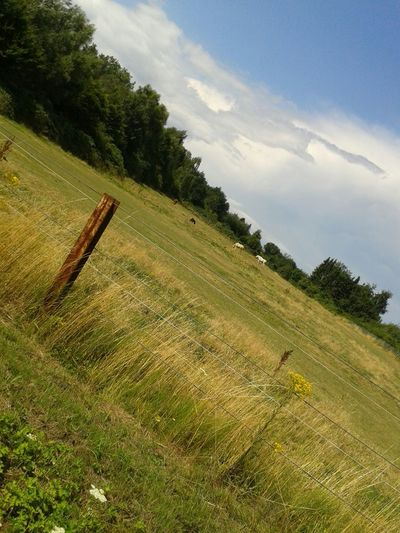 The Places ı've Been Today EyeEm Nature Lover Unterwegsunddraußen Draußen Im Grünen Nature On Your Doorstep Go For A Walk Capturing Freedom Summer Views
