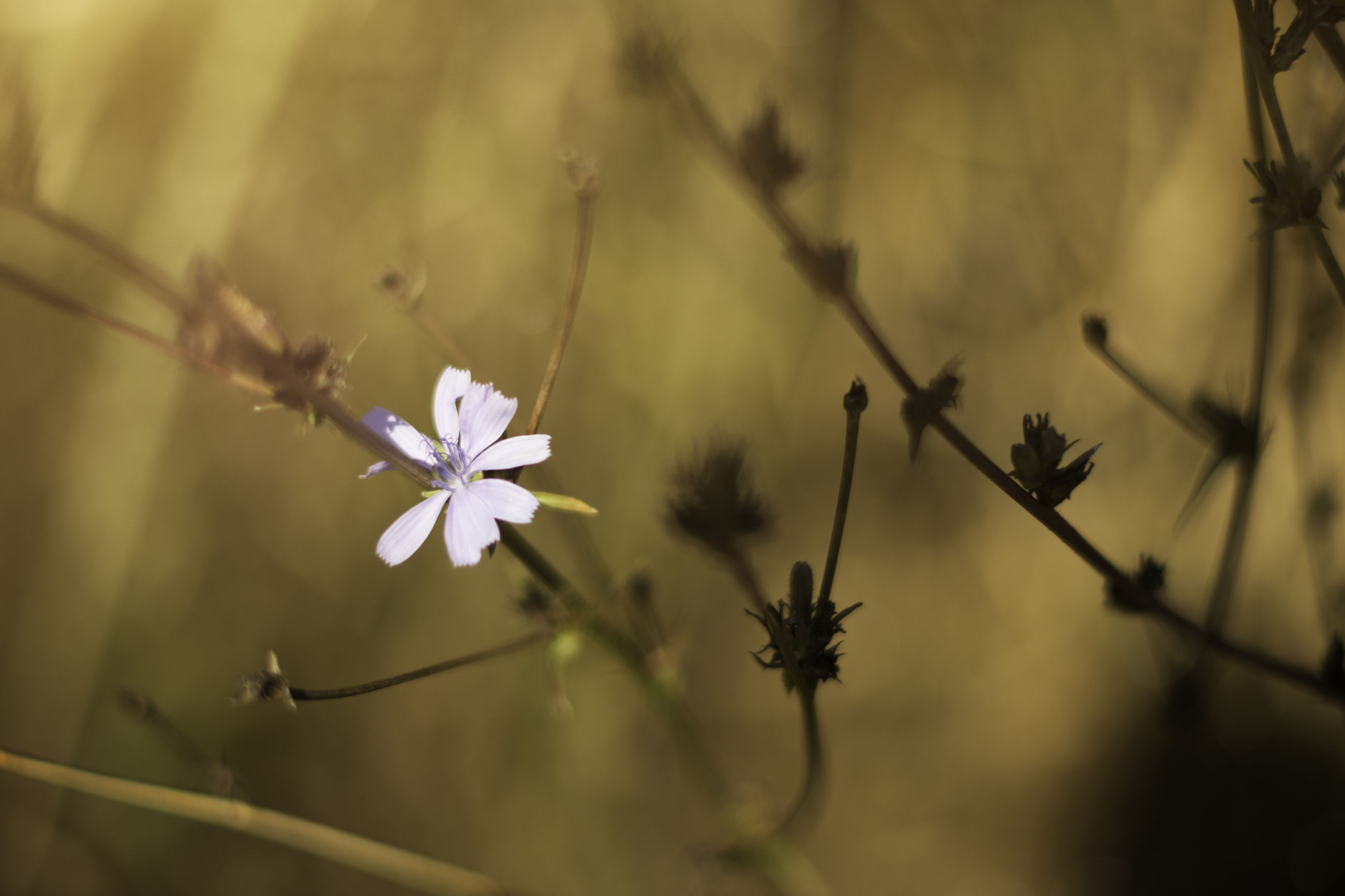 nature, growth, fragility, beauty in nature, flower, close-up, focus on foreground, no people, freshness, plant, flower head, outdoors, day