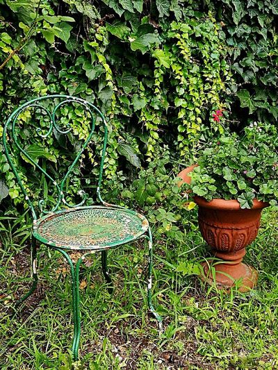 Green Color Plant Outdoors Grass Close-up No People Old Chair Iron Chair Garden DecorLeaf Green Flower