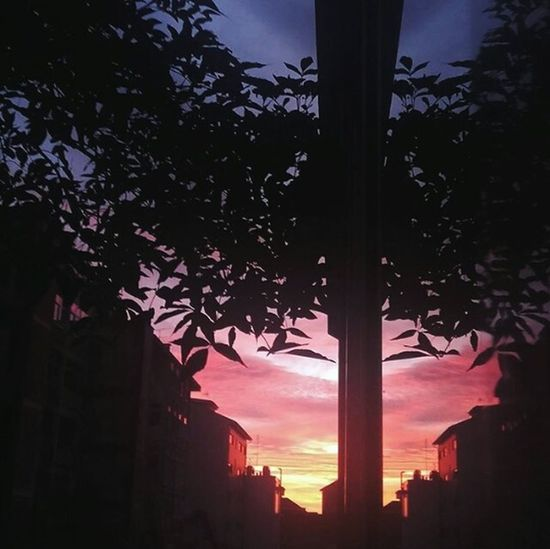 City Sunset Garden Neighborhood Window Sky