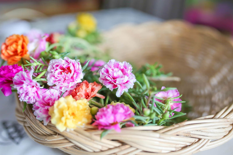 Close-up of pink flowers in basket on table