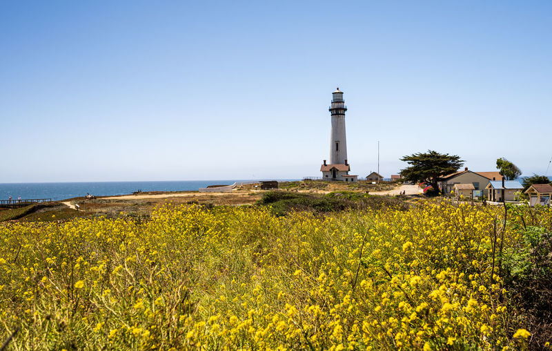 Scenic view of flowering plants by sea against clear sky