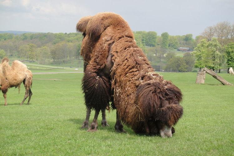 Grass Mammal