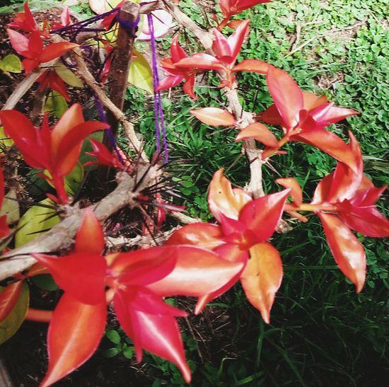 Beatyful Nature ⓛⓞⓥⓔ♡♡♡ Tranquility Photography Plant Naturaleza Viva🌵🌼🌸🌺🍃