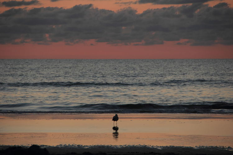 Silhouette seagull on shore at beach against sky during sunset