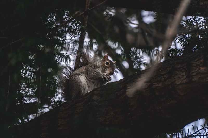 Squirrel Outdoors Park Nut Mammal Hungry Fluffy Tree Low Angle View Plant Animal Animal Themes Animals In The Wild One Animal Animal Wildlife No People Day Nature Branch Mammal Outdoors Tree Trunk Beauty In Nature Growth