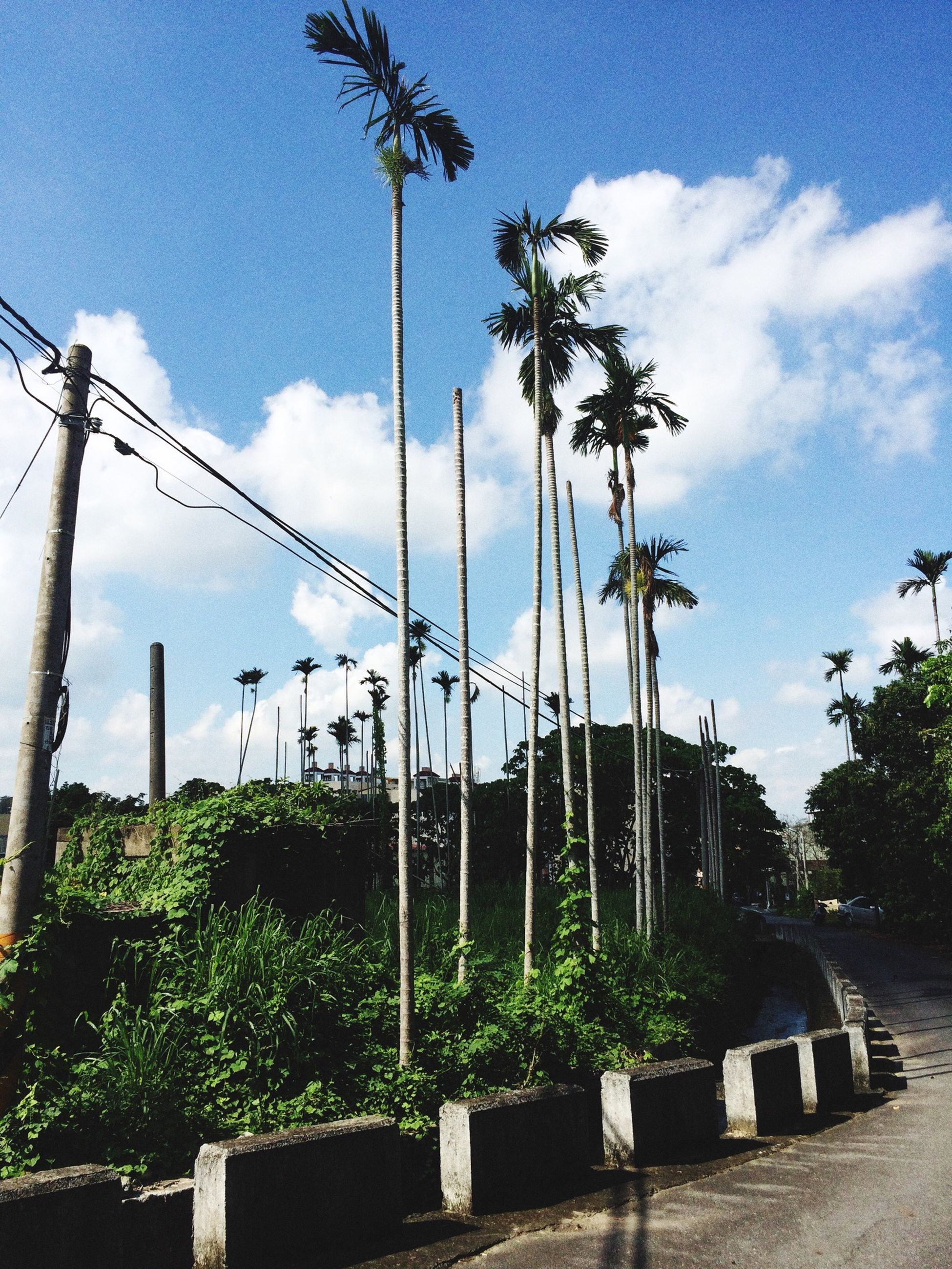 tree, sky, growth, palm tree, low angle view, street light, electricity pylon, road, power line, connection, cloud - sky, cloud, pole, plant, nature, sunlight, electricity, the way forward, no people, day
