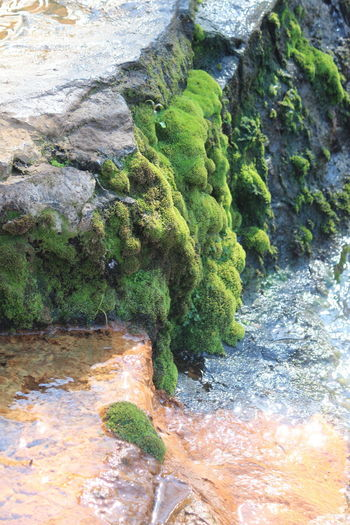 Rock Moss Green Color No People Water Nature Beauty In Nature Tranquility