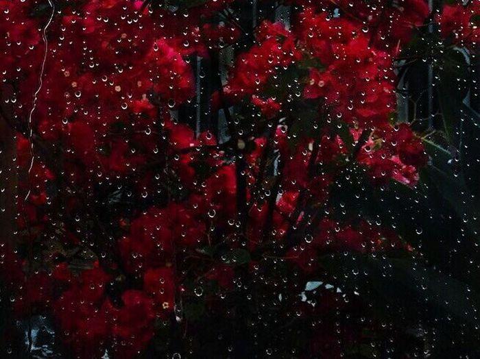 #капли #дождь #стекло #flovers #красный Red
